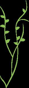 feuilles fond